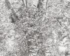 21-cabane-septembre-05-encre-sur-papier-48x60cm