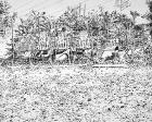 lzu02-jardin-septembre-02-encre-sur-papier-48x60cm